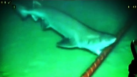 Sharks Don T Dine On Subsea Fibre Optic Cables Says Icpc